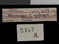 View Thomomys talpoides andersoni Goldman, 1939 digital asset number 0