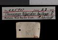 View Thomomys talpoides kelloggi Goldman, 1939 digital asset number 0