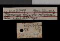 View Thomomys talpoides relicinus Goldman, 1939 digital asset number 0