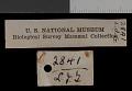 View Thomomys talpoides relicinus Goldman, 1939 digital asset number 1