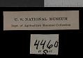 View Thomomys talpoides retrorsus Hall, 1951 digital asset number 1