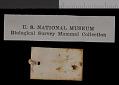 View Thomomys talpoides trivialis Goldman, 1939 digital asset number 1