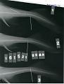 View Centroscyllium ritteri Jordan & Fowler digital asset number 0