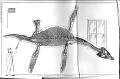 View Rhomaleosaurus cramptoni (Carte & Bailey, 1863) digital asset number 1