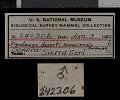 View Dipodomys deserti sonoriensis Goldman, 1923 digital asset number 0