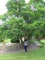 View Magnolia kobus DC. digital asset number 0