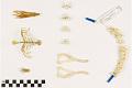 View Common Muskrat, Muskrat digital asset number 7