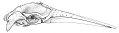 View Balaenoptera acutorostrata Lacepede, 1804 digital asset number 2