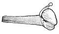 View Balaenoptera acutorostrata Lacepede, 1804 digital asset number 9