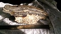 View Biotite-plagioclase gneiss digital asset number 1