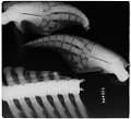 View Tursiops truncatus (Montagu, 1821) digital asset number 0