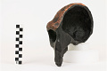 View Saldanha, Fossil Hominid, Human digital asset number 3