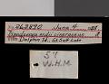 View Dipodomys ordii cineraceus Goldman, 1939 digital asset number 0