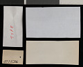 View Heteromys catopterius Anderson & Gutierrez, 2009 digital asset number 1