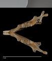 View Microdipodops megacephalus megacephalus digital asset number 2