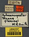 View Aphaenogaster texana flemingi digital asset number 2