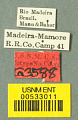 View Camponotus (Myrmothrix) wheeleri Mann, 1916 digital asset number 0