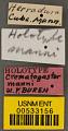 View Crematogaster (Crematogaster) manni Buren, 1968 digital asset number 2