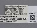 View Congomochtherus elferinki Londt & Tsacas, 1987 digital asset number 0