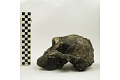 View KNM-ER 406, Fossil Hominid digital asset number 3