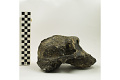 View KNM-ER 406, Fossil Hominid digital asset number 4