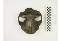 View KNM-ER 406, Fossil Hominid digital asset number 5
