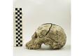 View KNM-WT 15000A, KNM-WT 15000, Turkana Boy, Human Fossil digital asset number 3