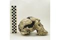 View KNM-WT 15000A, KNM-WT 15000, Turkana Boy, Human Fossil digital asset number 4