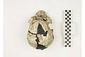 View KNM-WT 15000A, KNM-WT 15000, Turkana Boy, Human Fossil digital asset number 5