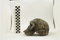 View KNM-ER 1813, Early Human digital asset number 3