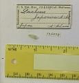 View Clathranachis japonica (Adams, 1860) digital asset number 0