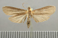 View Ardonea judaphila Schaus, 1905 digital asset number 2