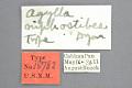View Agylla niphostibes Dyar, 1914 digital asset number 3