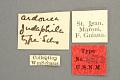 View Ardonea judaphila Schaus, 1905 digital asset number 4