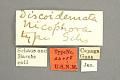 View Disoidemata nicephora Schaus, 1924 digital asset number 3