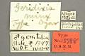 View Geridixis minx Dyar, 1914 digital asset number 3