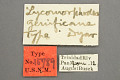 View Lycomorphodes genificans Dyar, 1914 digital asset number 0