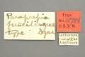 View Paraprepia fuscilingua Dyar, 1914 digital asset number 0