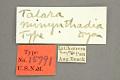 View Talara minynthadia Dyar, 1914 digital asset number 0