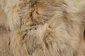 View Clothing Set: Fur Coat digital asset number 11