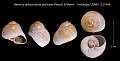 View Neverita delessertiana patriceae Petuch & Myers, 2014 digital asset number 0