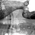 View Berardius bairdii Stejneger, 1883 digital asset number 4