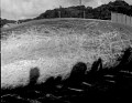 View Berardius bairdii Stejneger, 1883 digital asset number 2