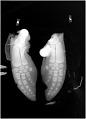 View Phocoena phocoena (Linnaeus, 1758) digital asset number 0