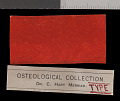 View Chaetodipus californicus californicus digital asset number 1