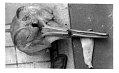 View Mesoplodon bowdoini Andrews, 1908 digital asset number 0