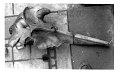 View Mesoplodon bowdoini Andrews, 1908 digital asset number 1