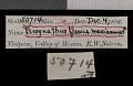 View Perognathus flavus mexicanus Merriam, 1894 digital asset number 0