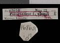 View Perognathus flavus piperi Goldman, 1917 digital asset number 0