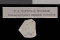 View Perognathus flavus piperi Goldman, 1917 digital asset number 1